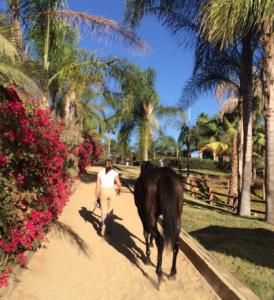 girl leading horse, annah douthrat