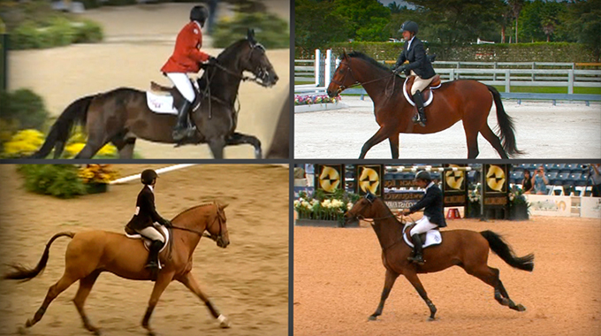 hip angles, show jumping,