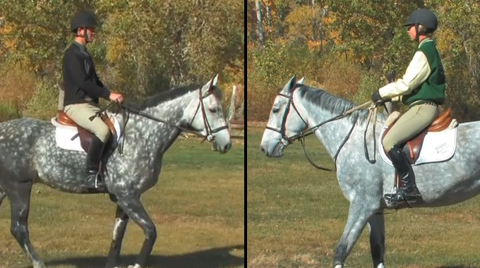 Communicating Effectively With Your Horse