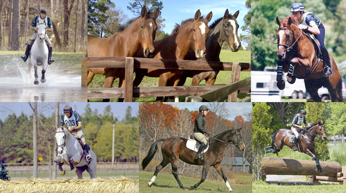 How Much Does A Horse's Breeding Affect His/Her Performance?