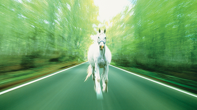 horse, road,