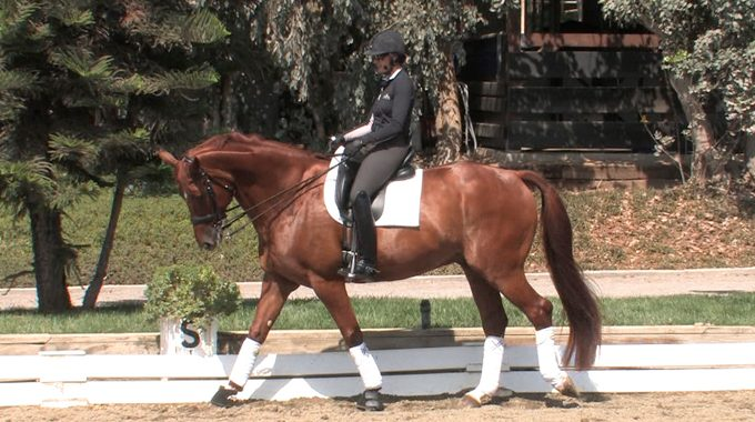 Warming Up Your Horse (Dressage)