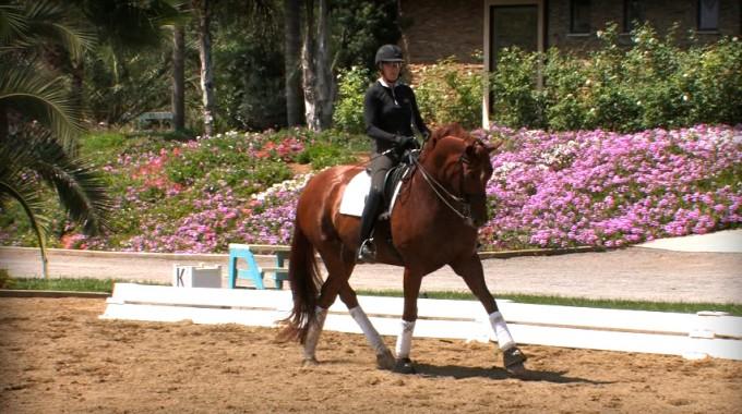 Horse, Dressage, Verena Mahin