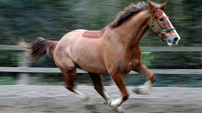 Loose Horse Featured Image
