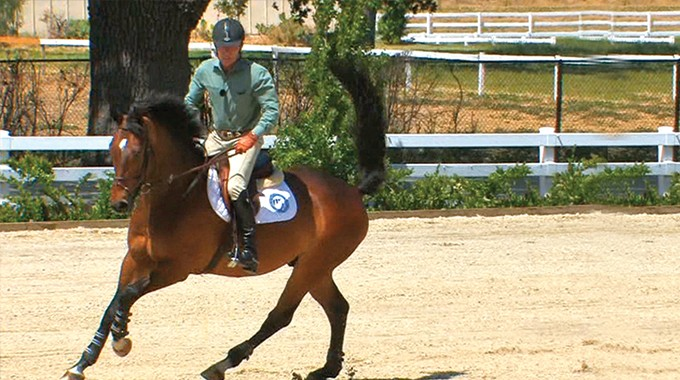 Exercises To Help A Sensitive Horse Get Supple And Bend Left