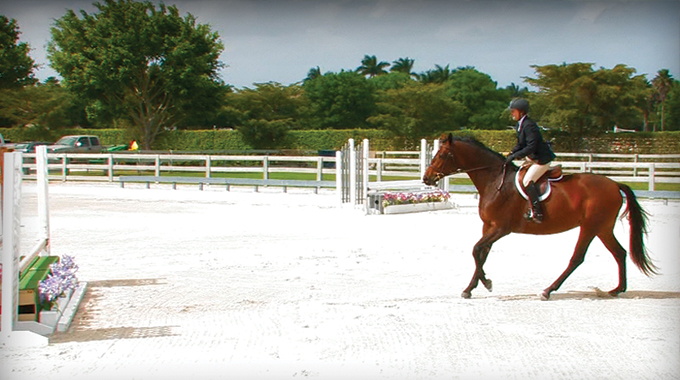 Tips To Help A Horse With A Short Stride Get Down Lines