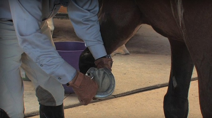 Safely Putting Calks In Your Horses Shoes