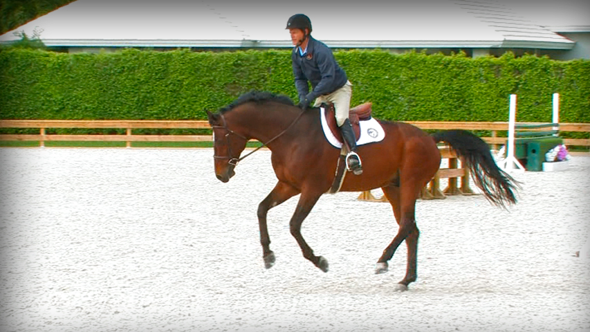 tips to manage a fresh horse from peter pletcher