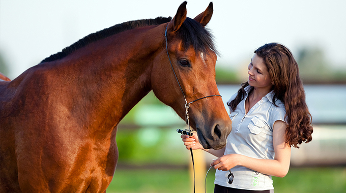 Managing A Stallion: Safely Encouraging Good Behavior