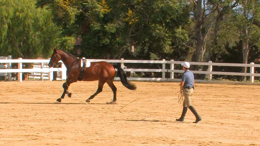 Bill Cooney pre-ride school on a lunge line