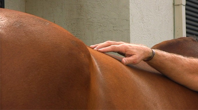 How To Tell If Your Horse's Back Is Sore
