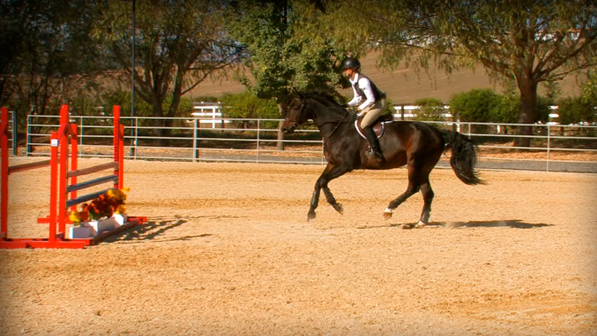 training your horse to not swap leads on the way to a jump