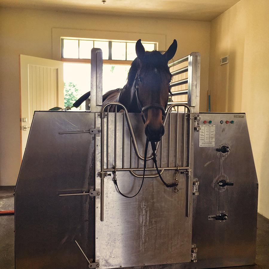 Horse in Spa