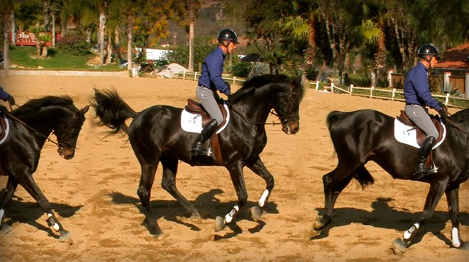 Get Your Horse To Stop Changing Leads At The Canter