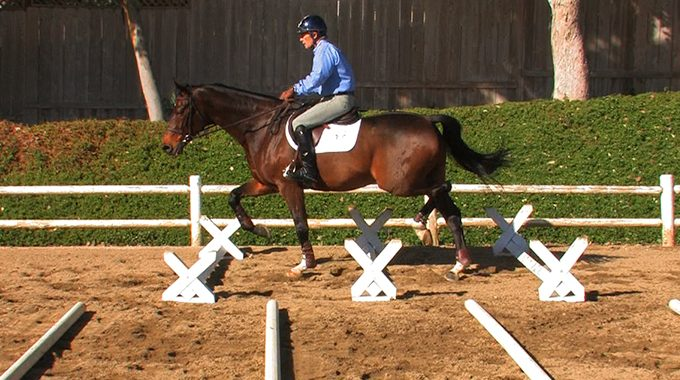 Tips To Help Your Horse Strengthen Their Back