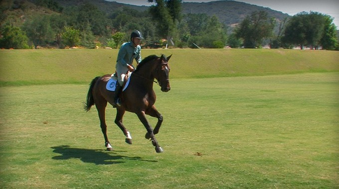 Training A Young Horse To Collect The Canter