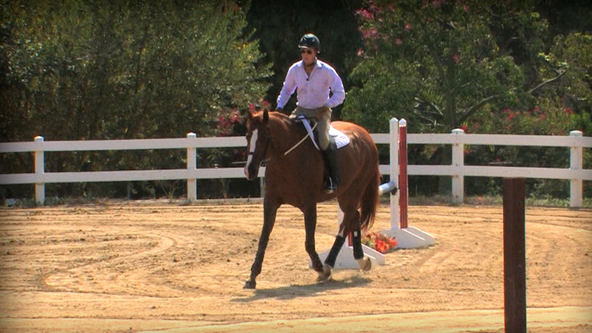 prepare your horse for a horse show