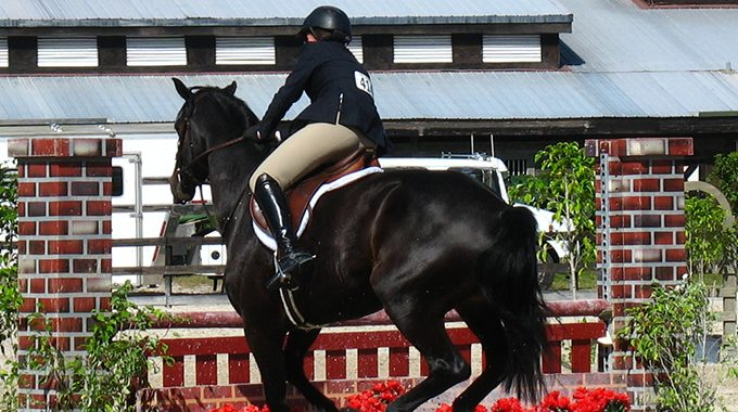 Tips For A Nervous Hunter Horse Who Is Spooky At The Jumps