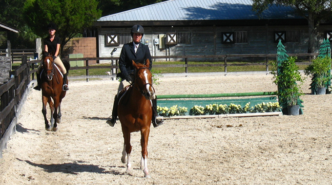 Advice To Keep A Hunter Horse Calm At Horse Shows And In Under Saddle Classes