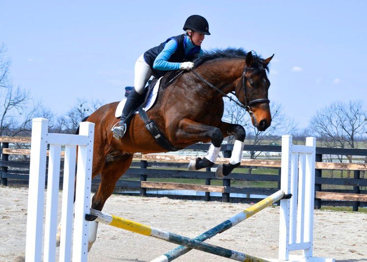 Thoroughbred Horse Jumping with Rider