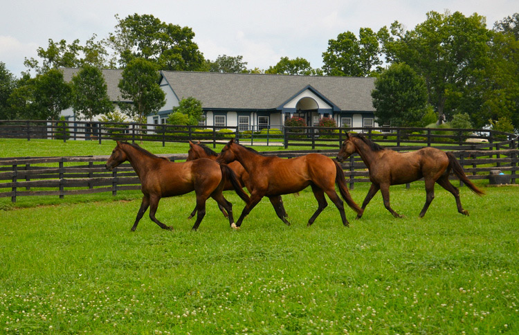 Group of Thoroughbred horses in a field