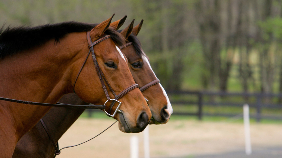 Making A Living With Thoroughbred Makeovers Equestriancoach Com Blog