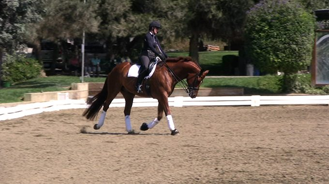Dressage: Bending A Horse Through The Rib Cage
