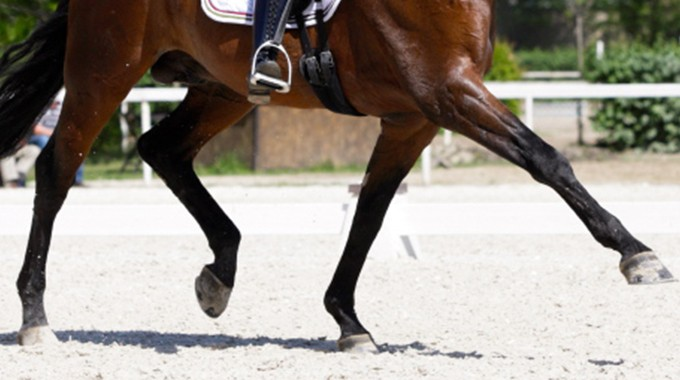 Dressage: Exercises To Develop Suspension In The Trot