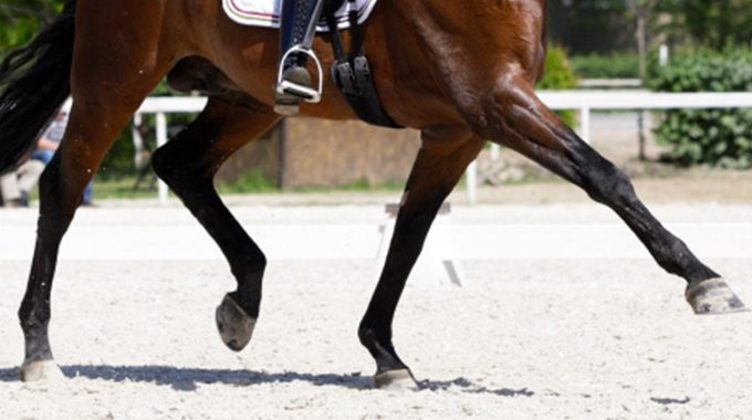 Dressage Trot Blog Featured Image