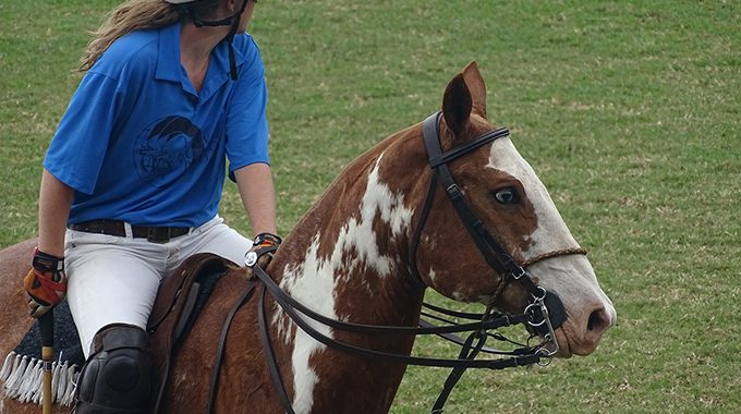 Strategy To Help An Ex-Polo Horse To Stop The Habit Of Raising Head In Resistance