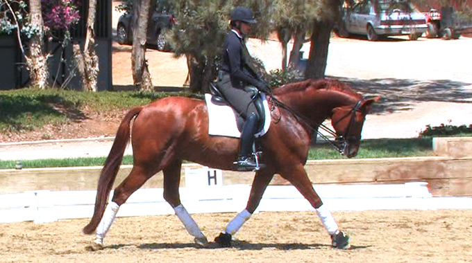 Dressage: Encouraging Your Horse To Reach For Contact With The Bit