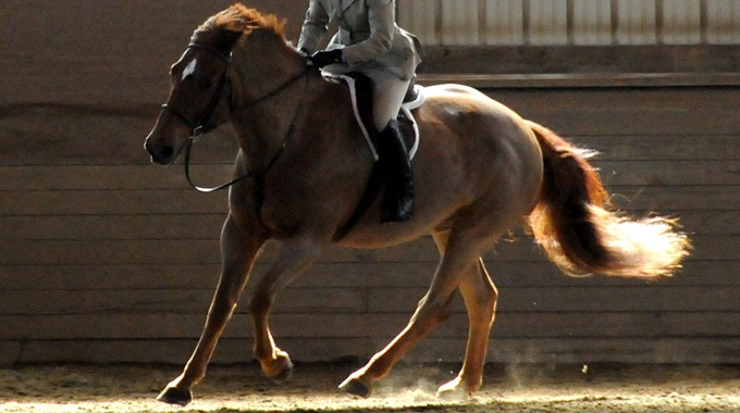 Training Your Horse To Lengthen Their Stride In The Corners On Course