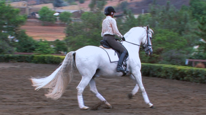 Introducing Flying Changes To A 3rd Level Dressage Horse