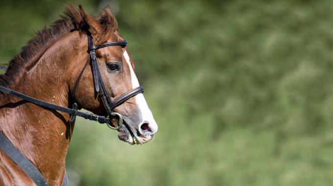 Help For A Thoroughbred That Gets Strong And Fast In Corners At The Canter