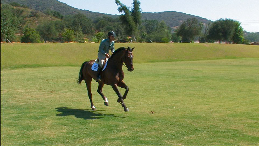 advanced fundamentals of flatwork for your horse