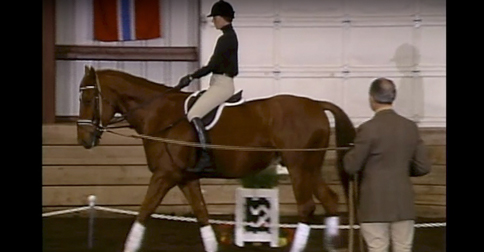 longe lesson to improve a riders position on a horse with bert de nemethy