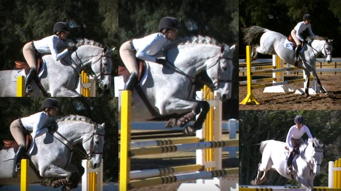 Which Release Is Best For Lower Level Hunter And Equitation Classes?