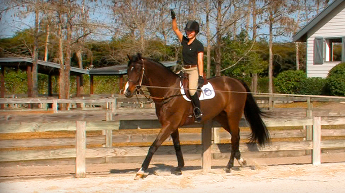 Exercise To Follow The Motion Of A Horse's Canter With Your Hips And Seat