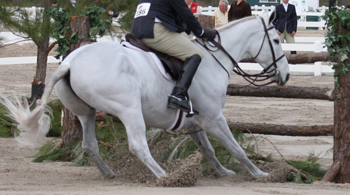 What To Do When Your Horse Stops At Jumps At Shows