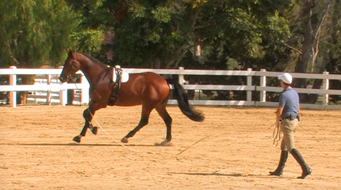 How To Handle A Young Playful Horse On A Lunge Line