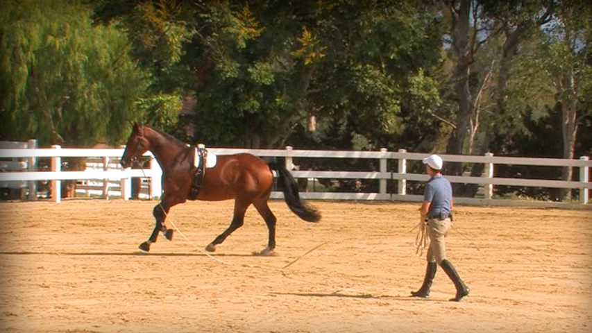 lunging a horse before you ride