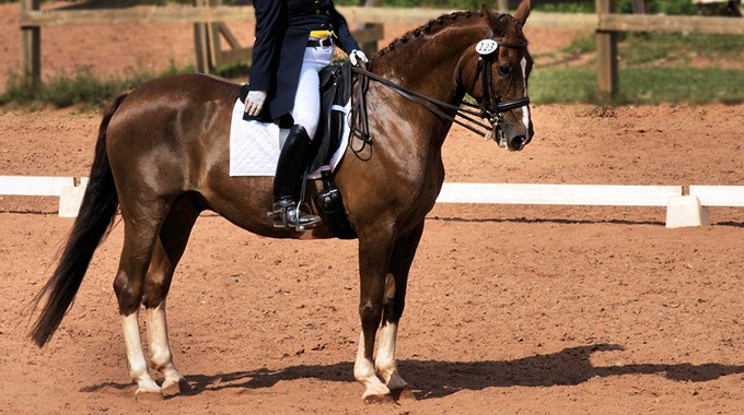 Train Your Horse Not To Get Heavy Down The Centerline At The End Of A Dressage Test