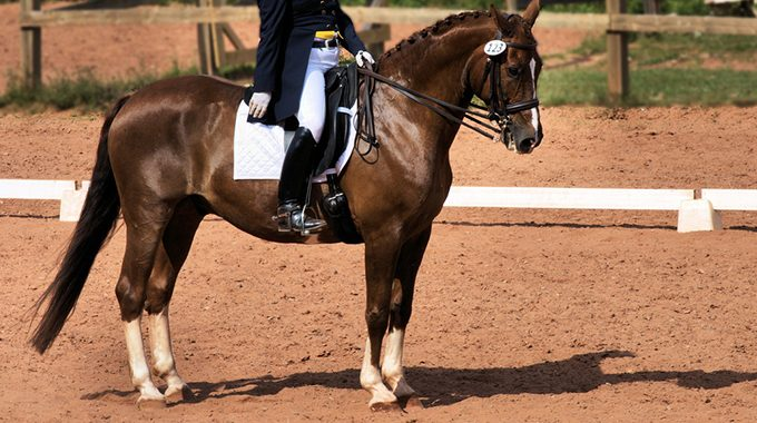 Dressage Halt Blog Featured Image