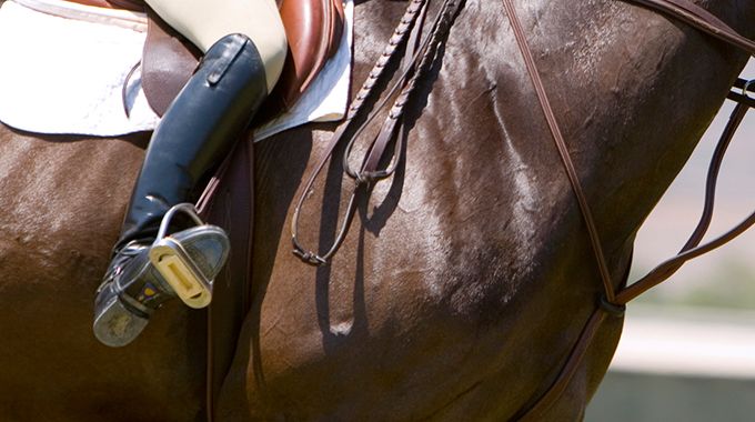 Learn Which Part Of The Rider's Leg Should Be In Contact With The Horse