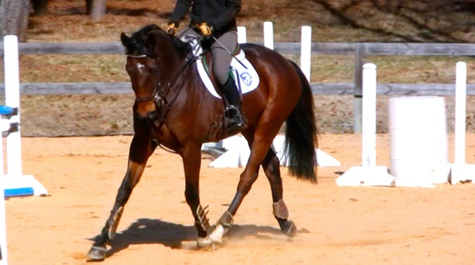 Training Your Thoroughbred Horse On The Flat For Eventing Horse Shows