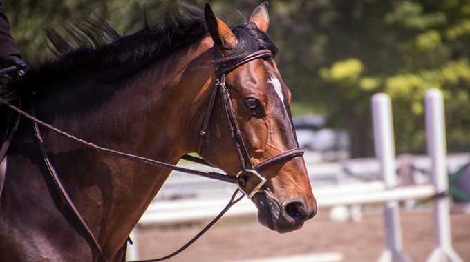 Exercises To Help Improve A Horse Who Is Stiff On One Side Of Its Mouth