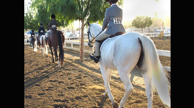 How To Win An Under Saddle Class