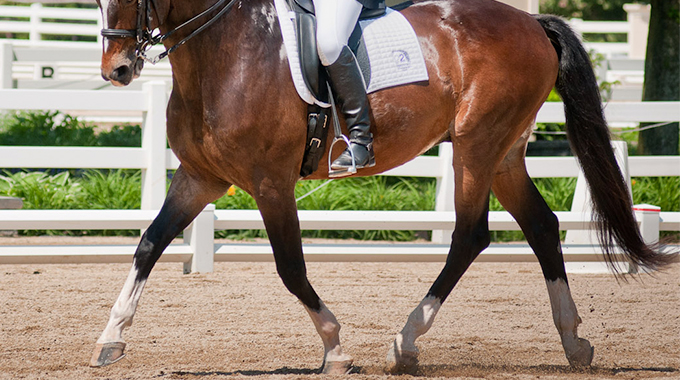 Dressage: How To Keep Your Horse Connected Through Transitions