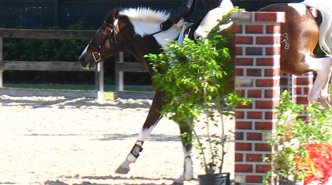 Train Your Horse To Land Further Away And Go Forward After A Jump