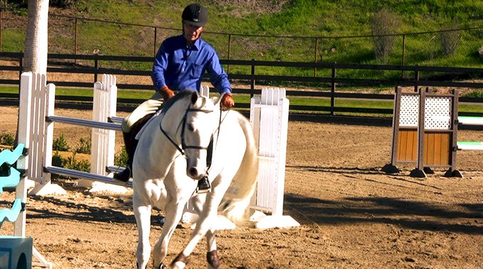 Improve Your Green Horse's Turning With These Rein Aids